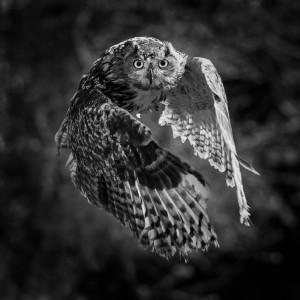 Arden Owls (4)